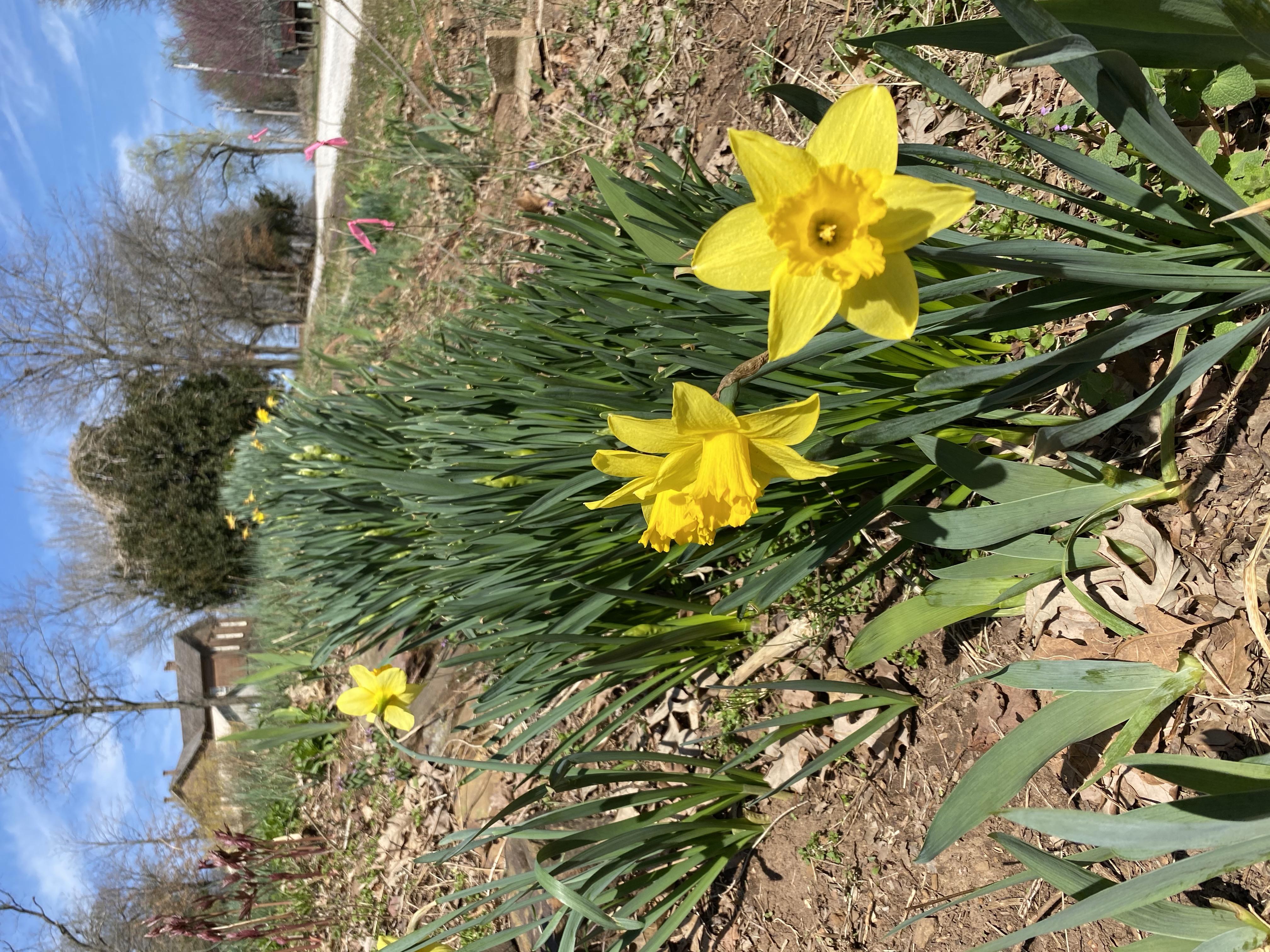 Spring in NW Arkansas